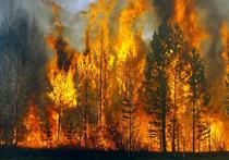 Почему в России каждое лето выгорают тысячи гектаров лесов