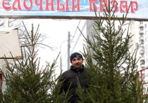 Елочные базары в Москве получат новый облик