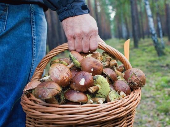 Ученые выяснили, что любимые многими грибы смертельно опасны