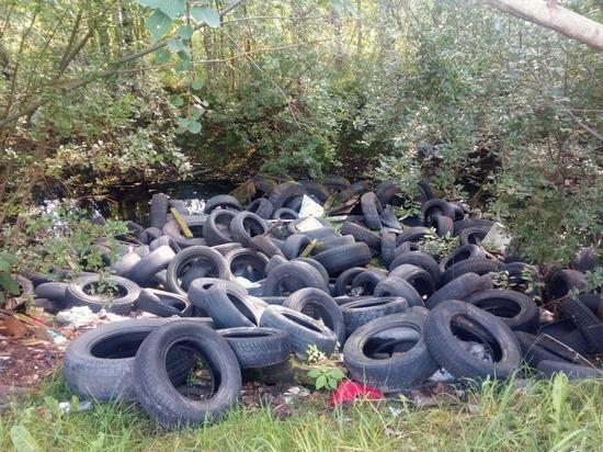 Волонтеры Петербурга собрали 17 тонн выброшенных автомобильных шин