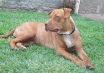 ТОП-7: Самые дорогие и редкие собаки Петербурга