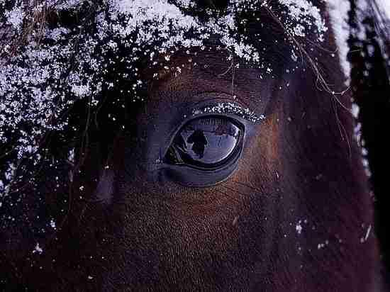 Лошадей ловили на трассе