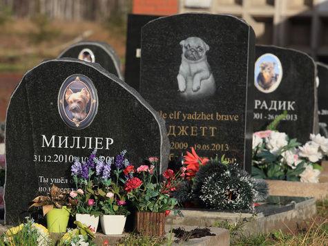 Есть ли закон о захоронении домашних животных Лизе