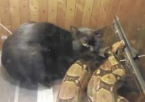 В Питере живодер двое суток мучил кота и удава